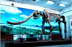 咸阳景点:大象犀牛化石博物馆
