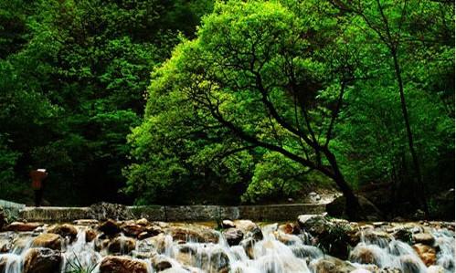 商洛景点:金丝峡国家级森林公园