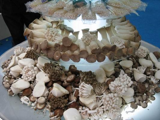 大荔县特产:香菇家族