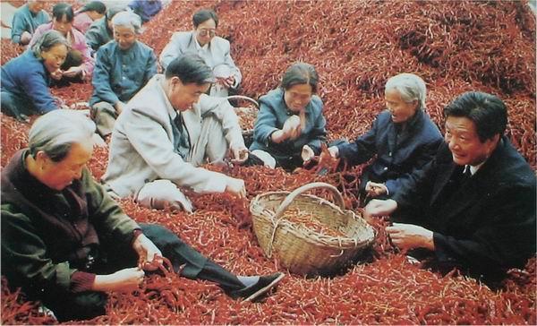 大荔县特产:沙底辣椒