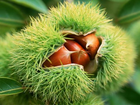 黄龙 玉米 黄龙 板栗 黄龙 花椒 黄龙 核桃 黄龙 苹果