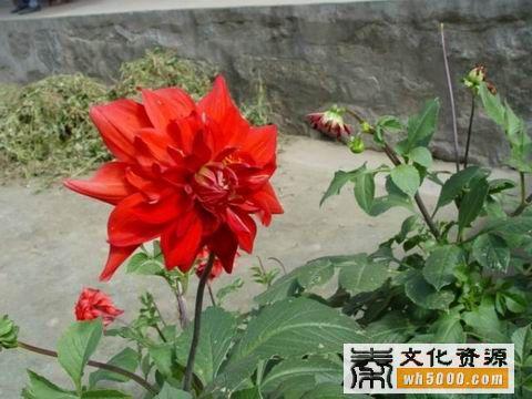 柞水县自然风光:山花烂漫