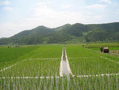 勉县地方特产:优质稻米
