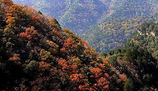 宜川蟒头山国家级森林公园