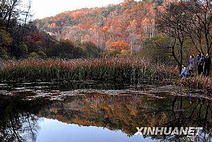 甘泉县劳山森林公园