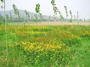 千阳千湖国家湿地公园