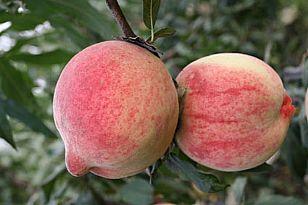 耀州区地方特产:桃
