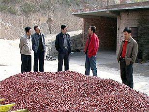 榆林市地方特产:红枣-吴堡