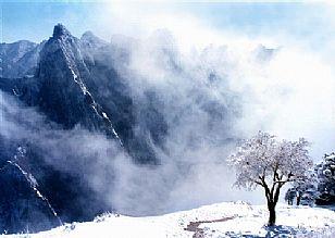 华阴市自然风光:雪中天堂:华山(组图)