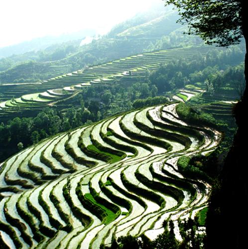 汉阴县自然风光:凤江梯田