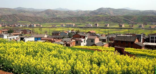 汉阴县自然风光:田间的灿烂