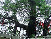 陕西南宫山国家森林公园
