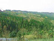 平利女娲山森林公园