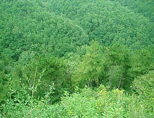 白水方山林场