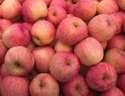 富平红富士苹果