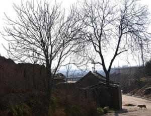 灞桥米家崖遗址