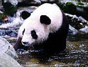 佛坪大熊猫保护区