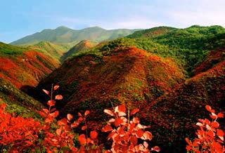 淳化仲山生态森林公园