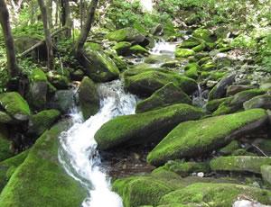 绿色的十寨沟