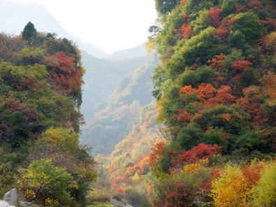 10月15日-11月25日少华山第四届红叶节[图]