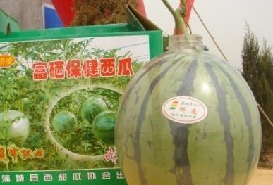 蒲城名优特产――吊瓶西瓜[图]