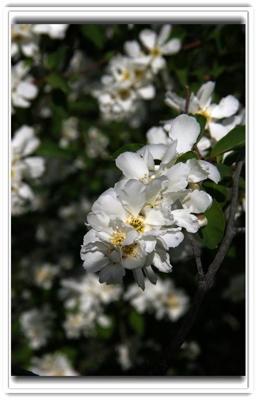 【三秦游】春天又见花开