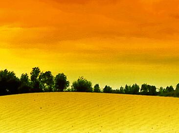 沙苑风光组图